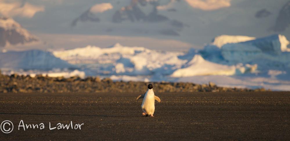 Rothera-Antarctica-26